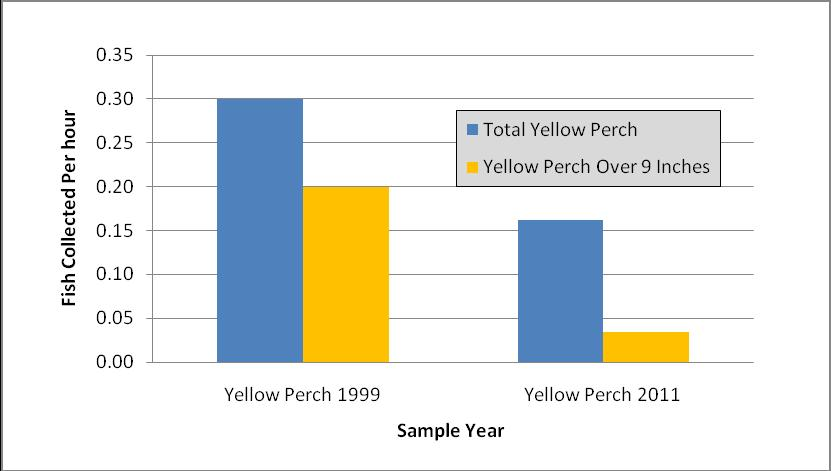 We had heard many stories from fishermen that frequent Wilmore Dam that they are still there in good numbers. In 2011 we captured 0.03 yellow perch over 9 inches per hour.