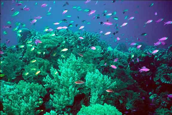 Corals Should be prevented Cradle to Myriads of