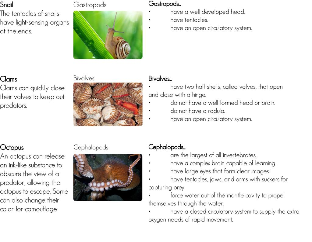 The major classes of mollusks vary in structure and function. You can read about some of their differences in Figure below.