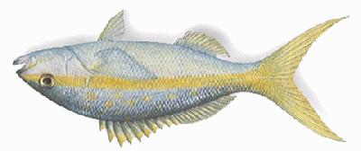 Yellowtail Snapper, Exploited, Protected and Fished 16 14 12 Mean Density 10 8 6 4 2 0 19961994-1997 1998