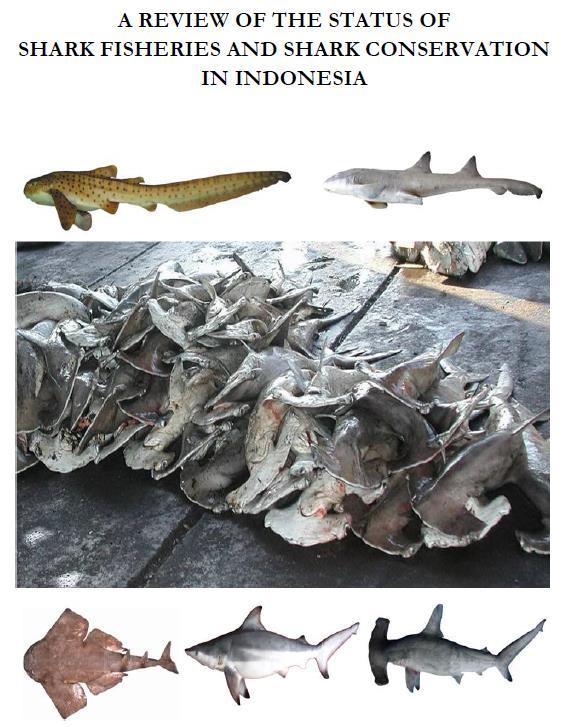 EVALUATION OF NPOA IMPLEMENTATION IN 2010-2014 1) Status of national shark fishery (2013) 2) Protection of endangered
