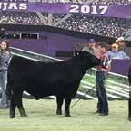 Livestock Show Sired by Bussmus Payday 2610