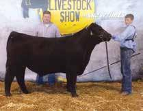 Champion Female 2017 National Western Stock