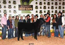 Knockout 204 Grand Champion Steer MN Jr Angus