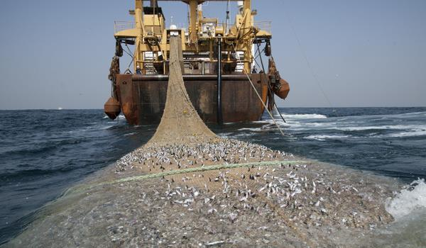 Illegal fishing impends the sustainability of fish stocks, damages the ecosystem and deprives African governments of revenue and people of livelihoods.