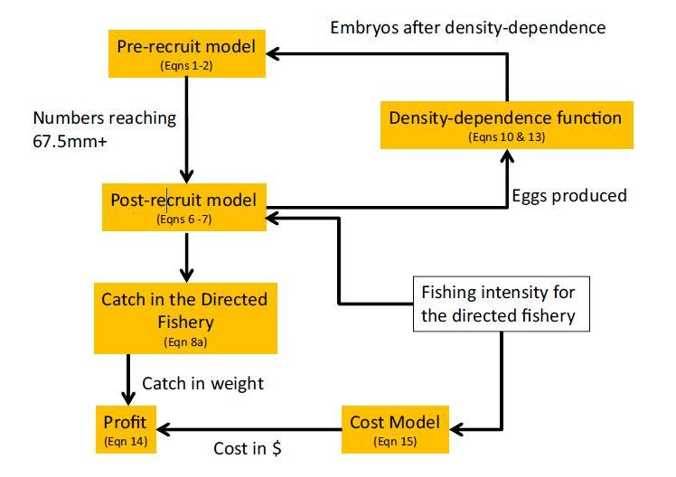 Fisheries population effects Experimental results were used to inform pre-recruitment model 1. red king crab juvenile survival during each stage 2.