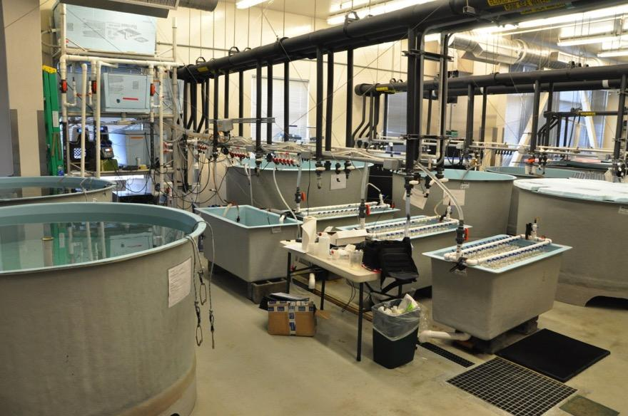 King and Tanner crab lab research CO 2 Delivery System Experimental Tanks Holding Tanks Treatment system: (2006-2007) Flow