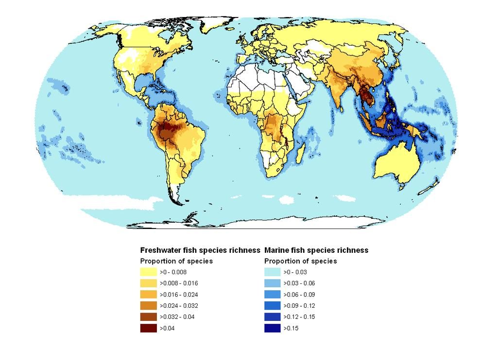Global species richness of