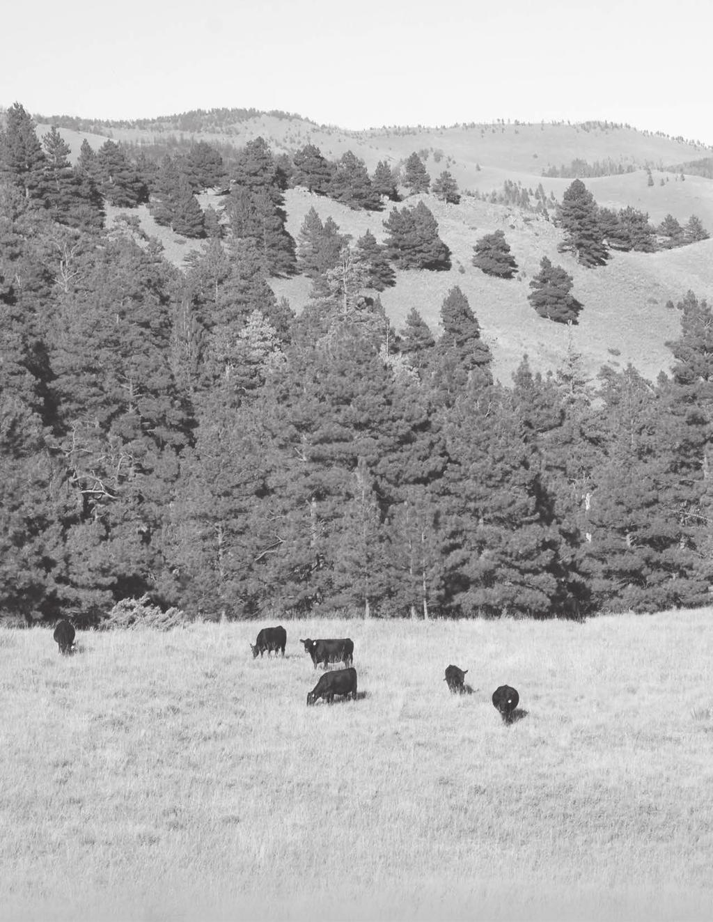 Over the past 27 years, Ox Bow Ranch has worked to develop a uniform, efficient, performanceoriented, maternal cow herd bred to meet the challenges of our rough country.