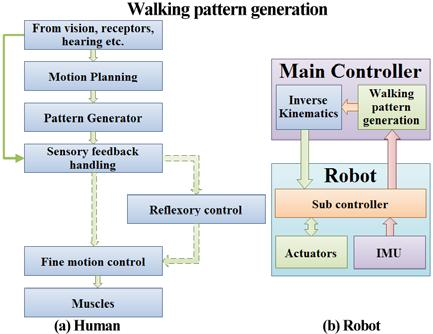 Design and Development of a Biped Humanoid Robot to Generate Dynamic Walking Pattern Shivaraj D. 1, Cyril Prasanna Raj P. 2, Lasitha M. 3 1- M.Sc. [Engg.