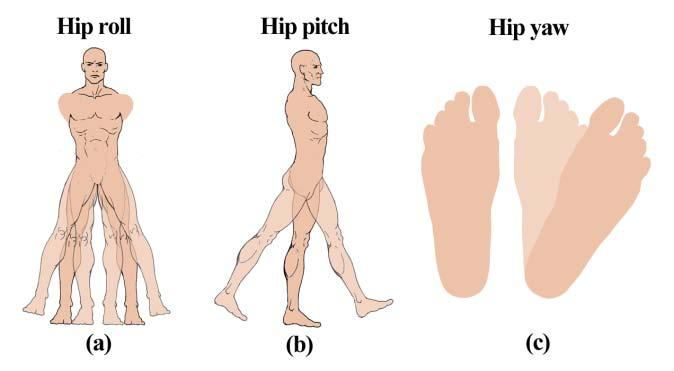 3 Hip In human the waist has 2 DoF namely pitch and yaw and the hip has 3 DoF namely yaw, pitch and roll.