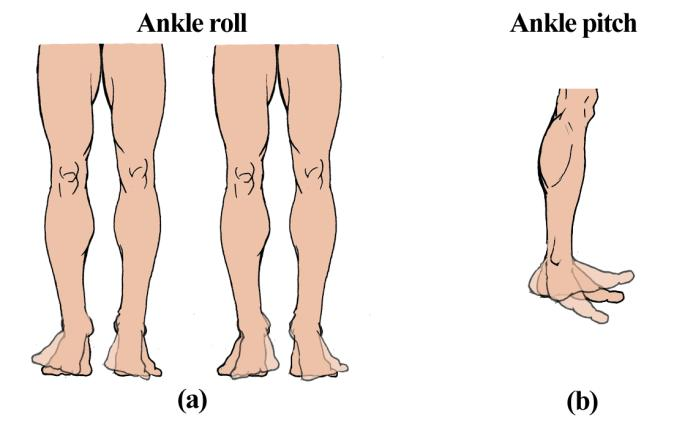 However in human the upper limb is the extension of the hip roll action also used by the thigh bone, hence it is also considered. Fig.