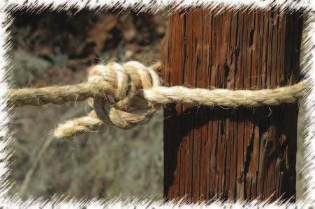 The illustration shows the Half Hitch tied with the end nipped under the turn of the rope some distance away from the standing part this method is fairly reliable for