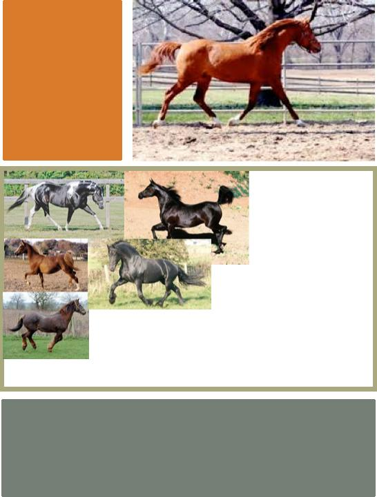 1. Notice how horses move. 1 2 What do you notice about the posture of each of these horses? 3 4 Which horses are moving with hollowed backs?