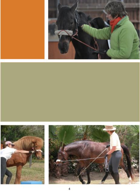 4. Rebalance your horse. Connected Groundwork The Benefits of Rebalancing Your Horse We know that most horses, when standing, place more weight on the forehand.
