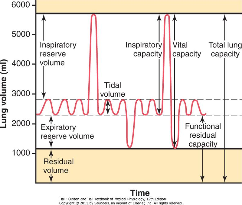 Figure 37-6 Diagram showing respiratory excursions during normal breathing and during maximal