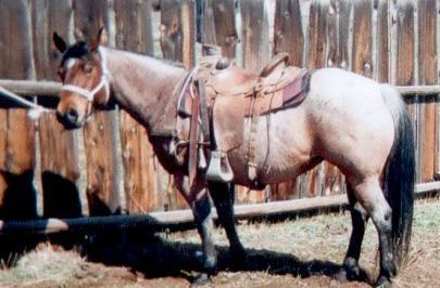 HIP 125 Silver 99 Grade Pony Black Gelding Joette Counts Trinidad, CO Well mannered handsome Black, half Welch pony. Ranch raised, will go any place you want him to. No bad habits.
