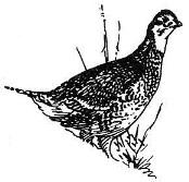 I. YOUR 2014/2015 UPLAND BIRD HUNTING SEASON IN SD You have been contacted because you purchased a upland bird hunting license in 2013.