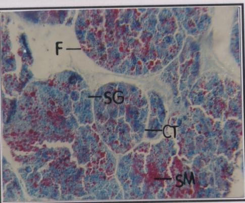 Part 5 Size specific histological details in