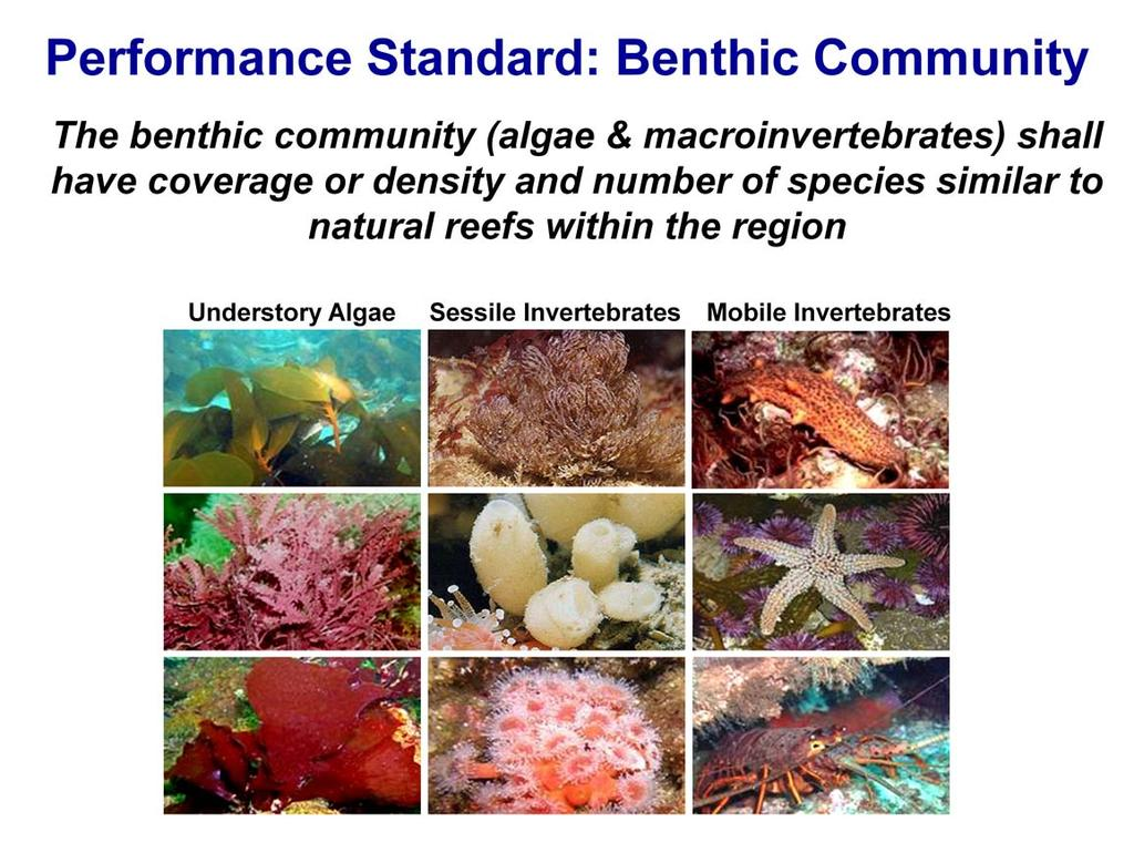 The performance standard for the benthic community is a relative standard that requires the abundance and number of