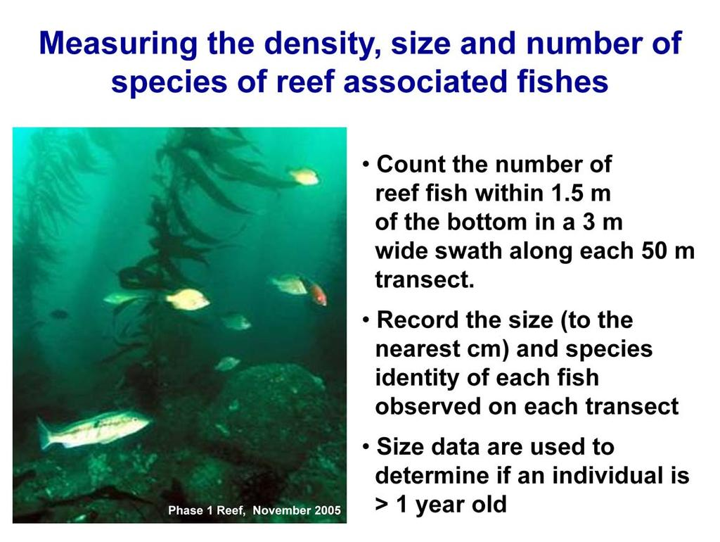 Reef fish are visually counted and sized by divers within 1.5 m of the bottom in a 3 m wide swath centered along each 50 m transect.