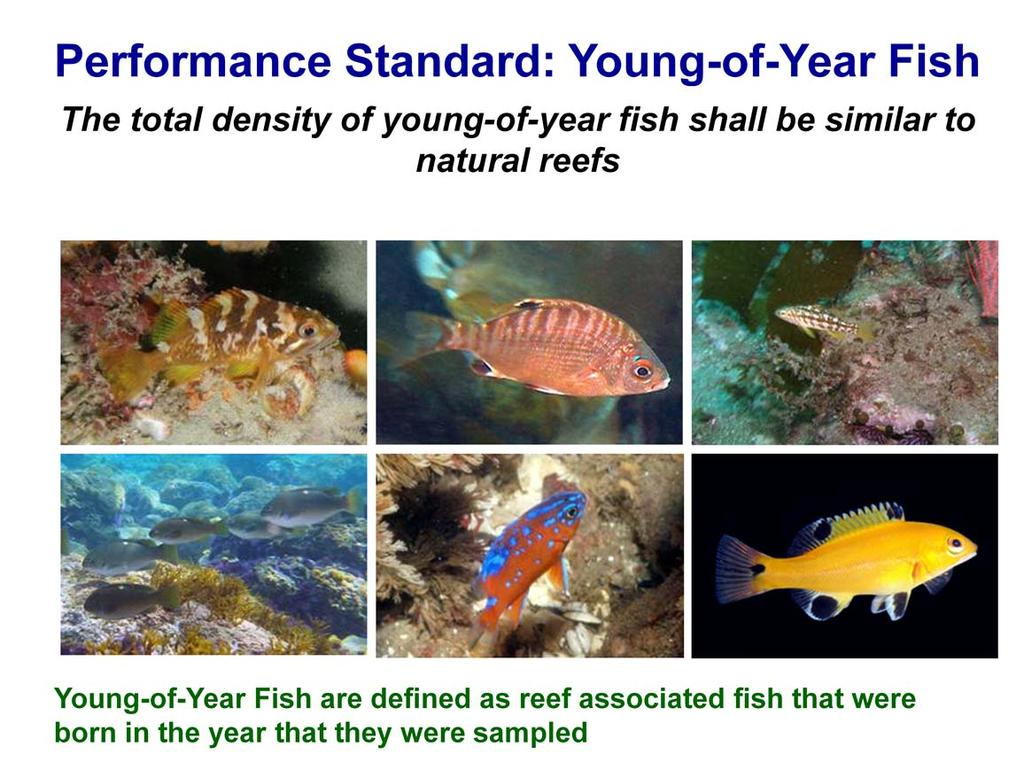 There is also a performance standard that requires the density of young-of-year fish on Wheeler North Reef be similar to natural reefs Young-of-Year Fish are defined as reef associated fish that were