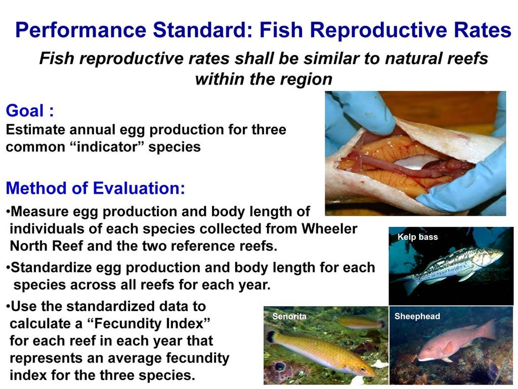 The rationale for the performance standard pertaining to fish reproductive rates is that for artificial reefs to be considered successful, fish must be able to successfully reproduce.