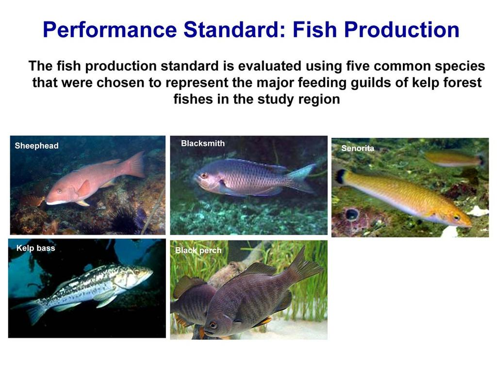 We use five indicator species to estimate fish production on Wheeler North, San Mateo and Barn.