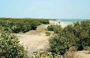Status of the Coastal and Marine Environment Commencing in the north, the coastline is relatively undeveloped and contains interesting features such as mangrove and salt marsh habitats, coastal sand
