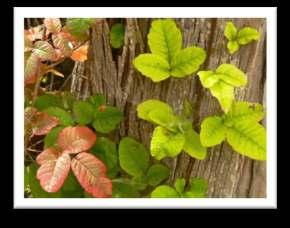 Neutral Support by Mike s Bikes Do you know about poison oak? You definitely want to know how to identify poison oak by the time you get to the race. Remember leave of three, let them be!