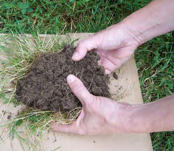 Take multiple samples throughout the lawn area to determine which areas may need treatment.