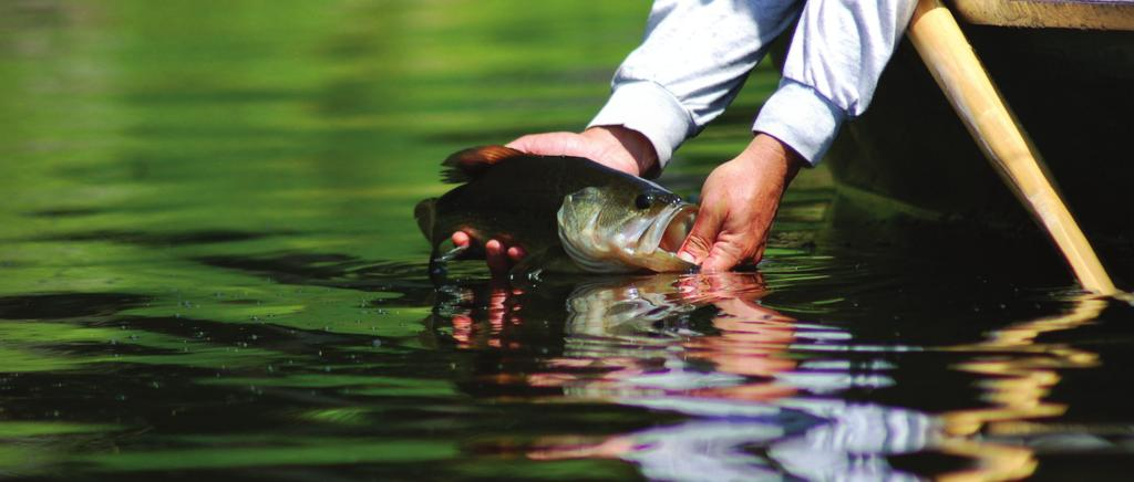 EXECUTIVE SUMMARY For over 75 years, the Federal Aid in Sport Fish Restoration Fund has worked with state partners to conserve, protect, and enhance fish and their habitats, along with the sport