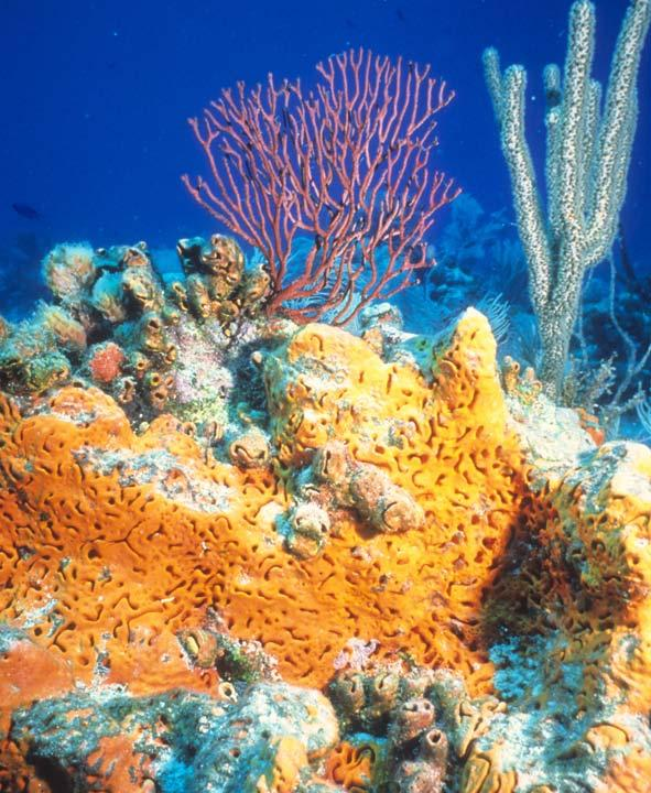 Coral Reefs A Reading A Z