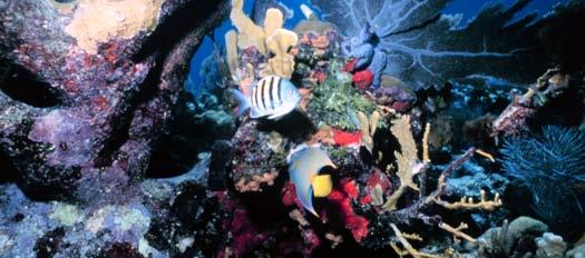 Many kinds of coral, fish, and sea creatures live in a reef. Introduction Table of Contents Introduction... 4 What Is Coral?... 4 A Busy Home Under Water.