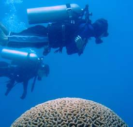 Glossary Divers still enjoy visiting fragile reefs. Almost 25 percent of the world s reefs have been destroyed. More than half of the rest are damaged. We can all do things to help protect the reefs.