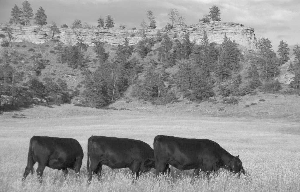 Montana Grasslands Heifer Project We realize as a cowman reading the catalog you are interested in cattle whom benefit from your experience and exceptional management.