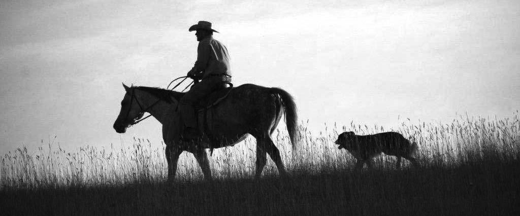 WE MARKET WORKING CATTLE RANCHES We have connections far outside the State of Montana through our purebred business.