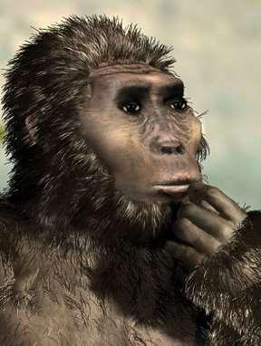 afarensis Thought to be same species, but further examination showed