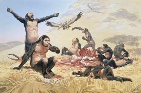 If Homo habilis was hunting animals, then we would expect: cut marks