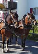 Activities in Summer 1 Horse-Drawn Carriage - Rigi Kaltbad In a horse-drawn carriage you can travel comfortably through the fairytale land of
