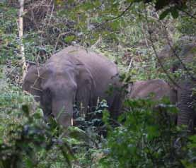 killed and confirm the hypothesis that the elephants from the forest of Congo were the first victims of this channel.
