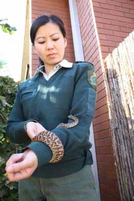 , Appendix or II) Mount Austin, New South Wales, Australia April 8, 2014 The python was nestled in the back of a basement. The owners will later be interrogated by police.