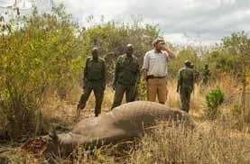 Poaching of a black rhino Kenya June 2014 10 gunshots in the dark. At noon, the body of the female rhino was found.