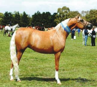 Let us help you find your dream horse, whether it be a show/breeding horse, a pony