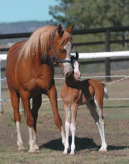 This test tells you what your mare won t F o a l W at c h T e s t K i t predicts birth within 24 hours Eliminates Nightly Foal Sitting Veterinarian Recommended Safe and Easy to Use Sharon Meyers