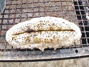 Properly dried sea cucumbers make no noise when pressure is applied and have a very hard outer surface. This indicates that the product is fully dried and can be packed after grading.