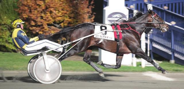 A Proven Sire from the Great Kadabra! TEXT ME Kadabra-Dial Nile-Super Bowl 2, 1:56.2s; 3, 1:54.