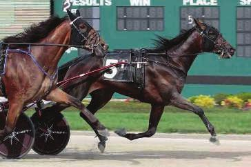 Credit Winner-D Train-Donerail 3,1:52m ($365,541) Pedigree. Proven Results. Commercial Appeal.