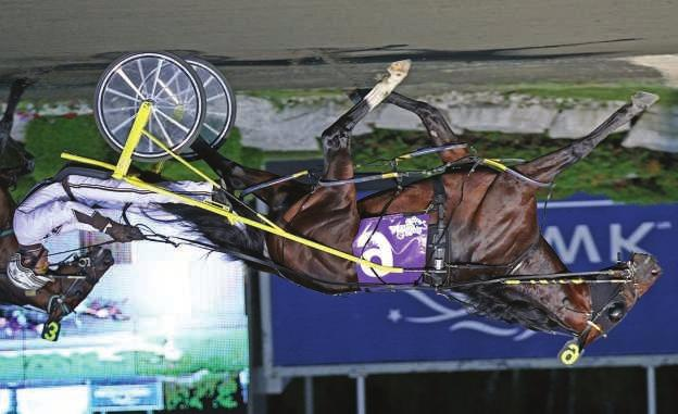 JK ENDOFANERA North America Cup & Major Stakes Winner Of Over $2-Million p,2,1:51.4; 3,1:48.2 ($2,049,580) Art Major-Presidential Lady-Presidential Ball At two.