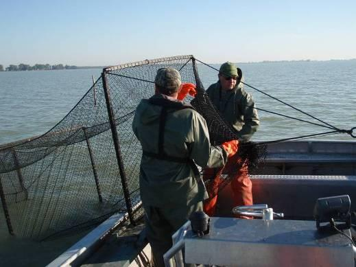 Ontario Fall Trap Net Index Evaluates the adult fish community composition Survey dates back to 1974 3 sites
